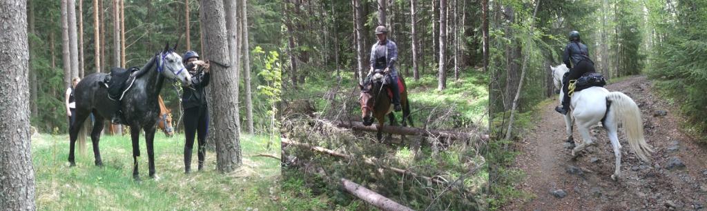 Långritt till häst