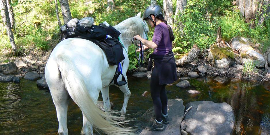 Vattna häst