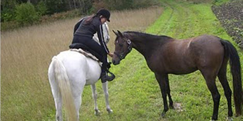 Inkallning av lös häst
